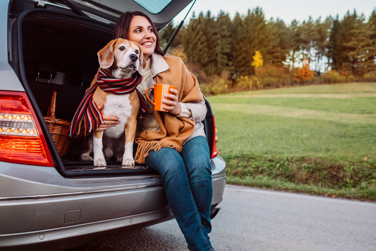 Pet safety in cars is possible with advice