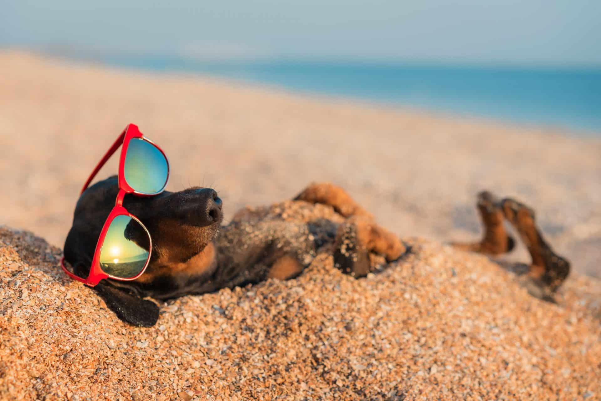 luxury pet holiday