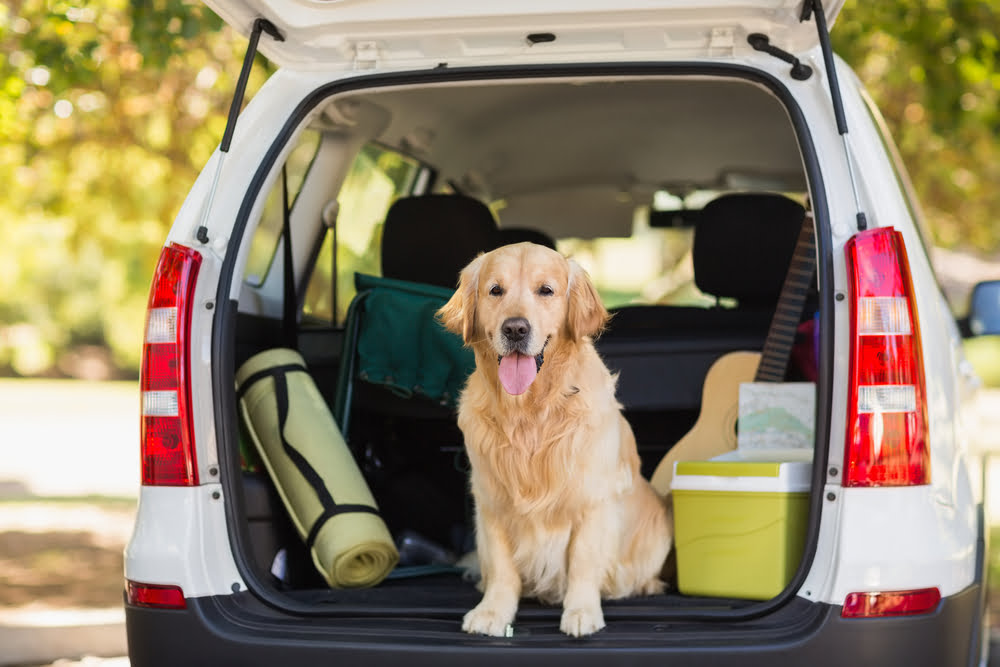 Travelling With Dogs, Cats and Horses