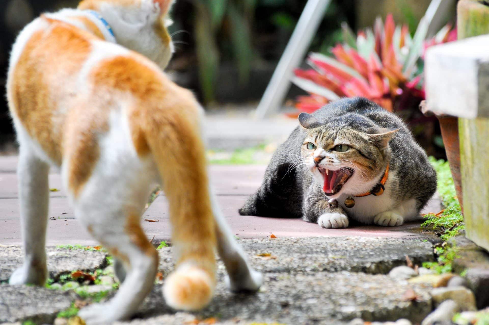 3 ways to break up a cat fight