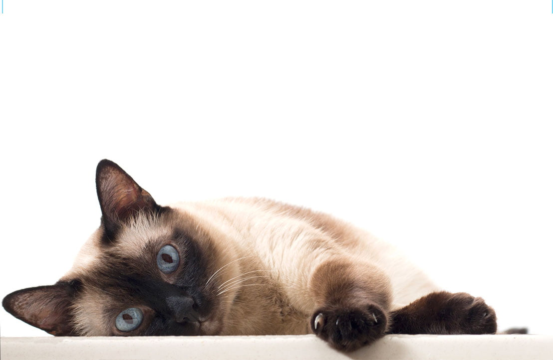 PD Insurance loves cats