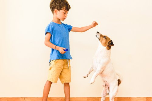 Boys uses easy dog training tips