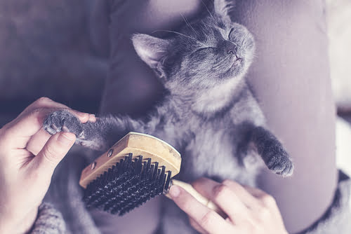 massage is one of the ways to pamper a cat