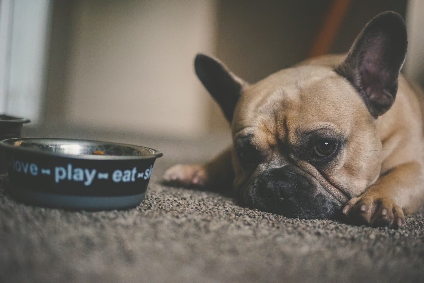things that can poison your pet include common foods