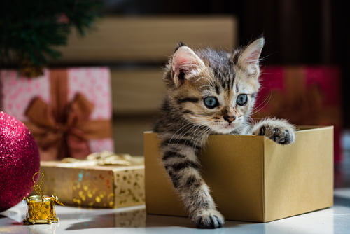 Pets as Christmas gifts like this cat must go to the right home