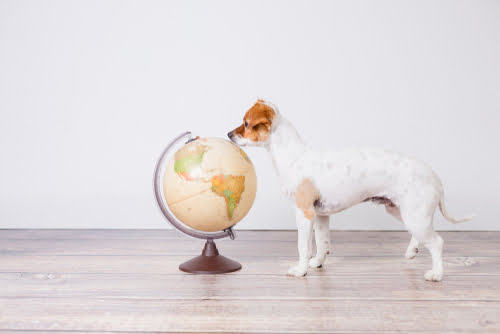 ethical Christmas gift guide for pets helps save the planet