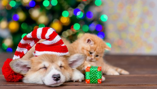 ethical Christmas gifts for pets come in all shapes and forms