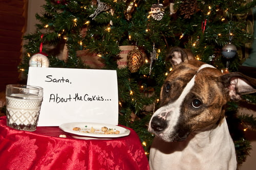 Christmas dinner and pets needs serious consideration about toxic foods