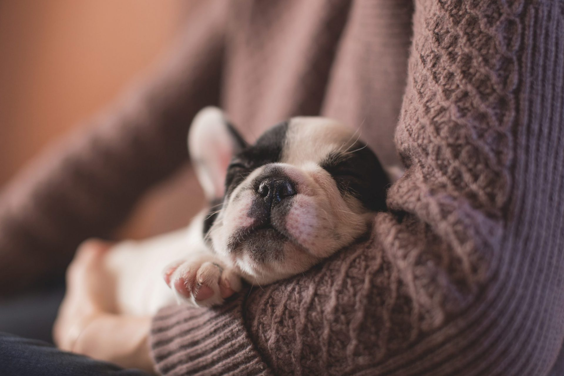 Is pet insurance worth it is a question many pet owners ask