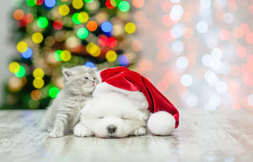 A Christmas gift for your pet is pet insurance