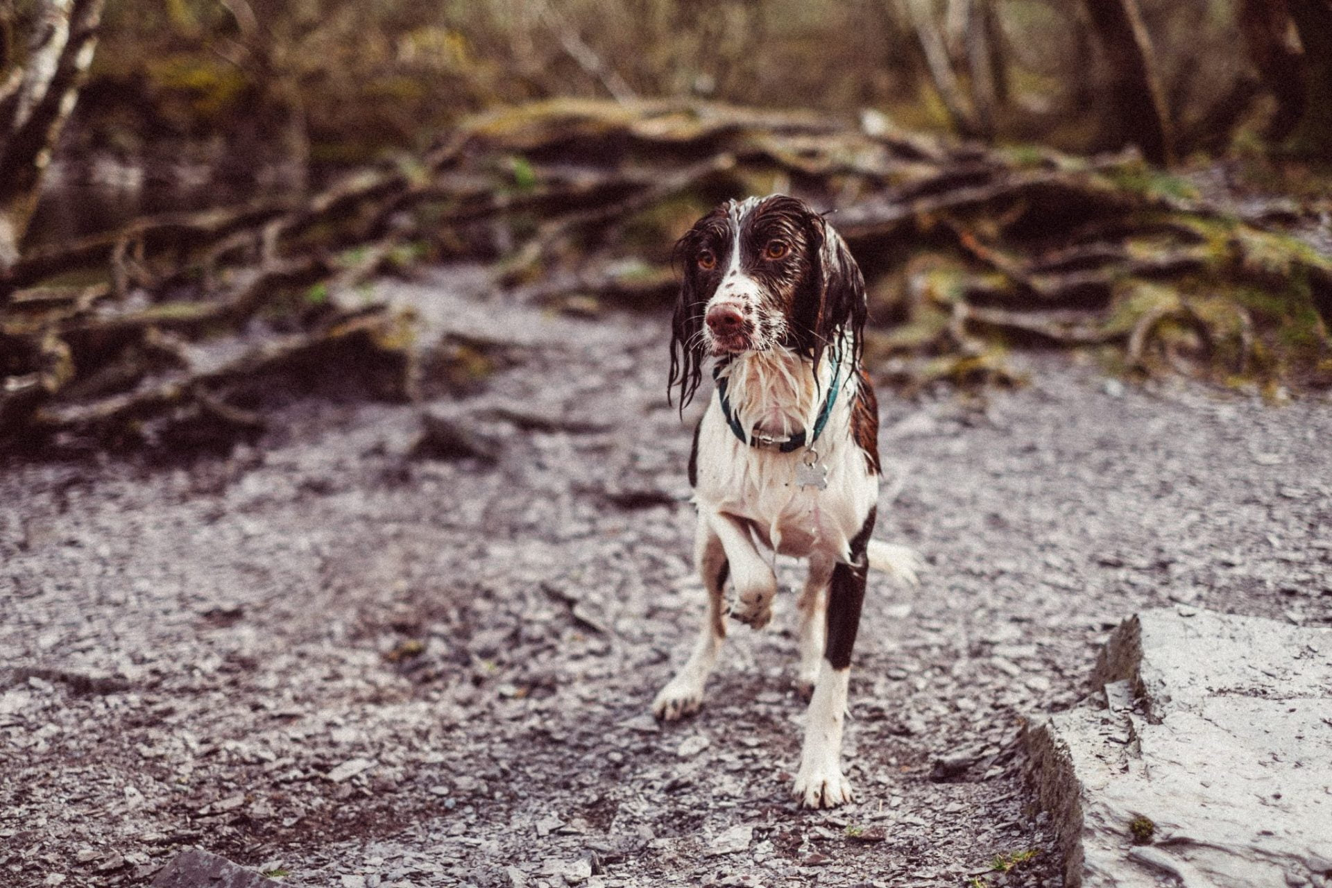 this dog is a lost pet in fire and flood