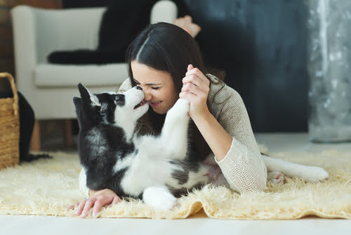 7 Steps to Being the Purrfect Pet Parent in 2021
