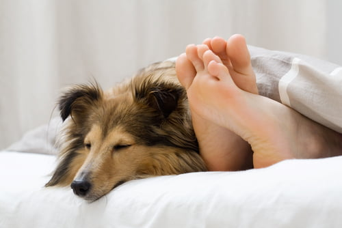 Sleeping with Your Dog in Your Bed - Why You Should