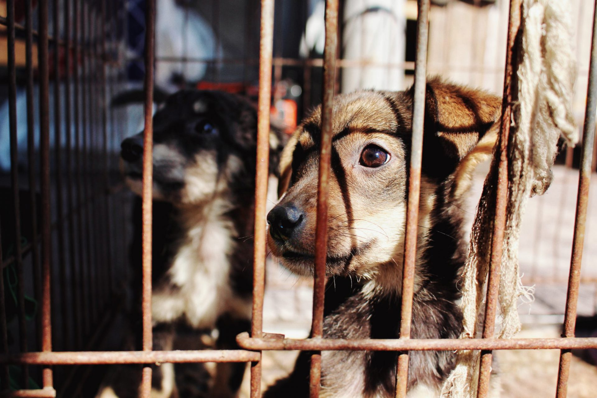 puppies in puppy mill behind cage