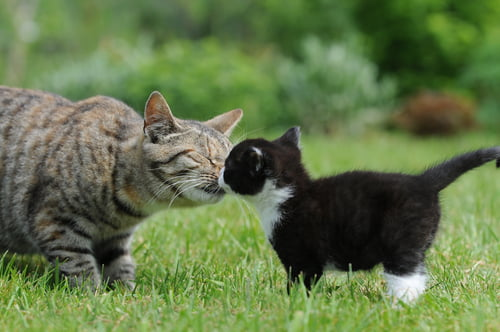 Only introduce your cats in person once you've followed the smell & sight steps.