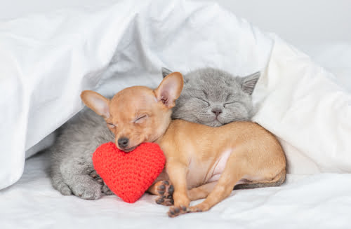 We love our fur kids as much as this puppy and kitten love each other!