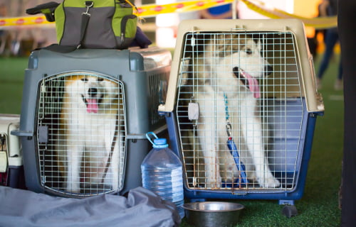 two dogs in pet crates preparing to fly