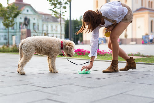 This pet parent has brought her puppy poop etiquette kit with and is safely removing her pooch's poop,
