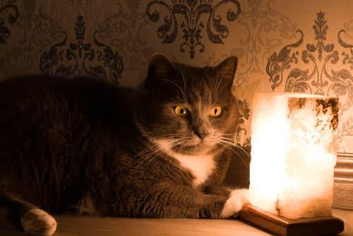 This Himalayan Salt Lamp can be harmful to pets.