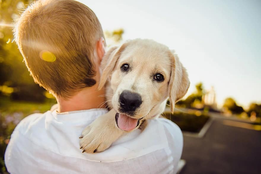 Find out how to prove your dog is purebred in New Zealand.