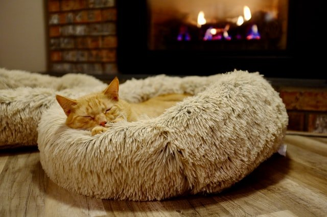 ginger cat on bed in front of fire
