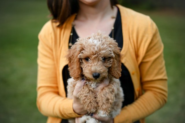Taking puppy health care seriously is important for finding ethical breeders like this