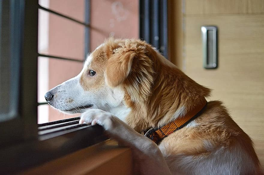 Obsessive-compulsive disorder in dogs can result from separation anxiety.