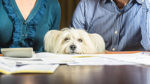 pet dog sits between couple working out pet prenup documents