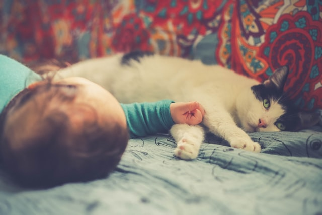 cats and babies can be great friends