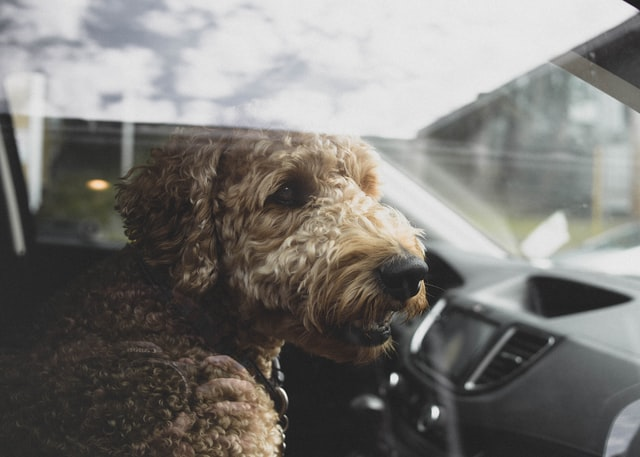don't leave dogs in hot cars like this