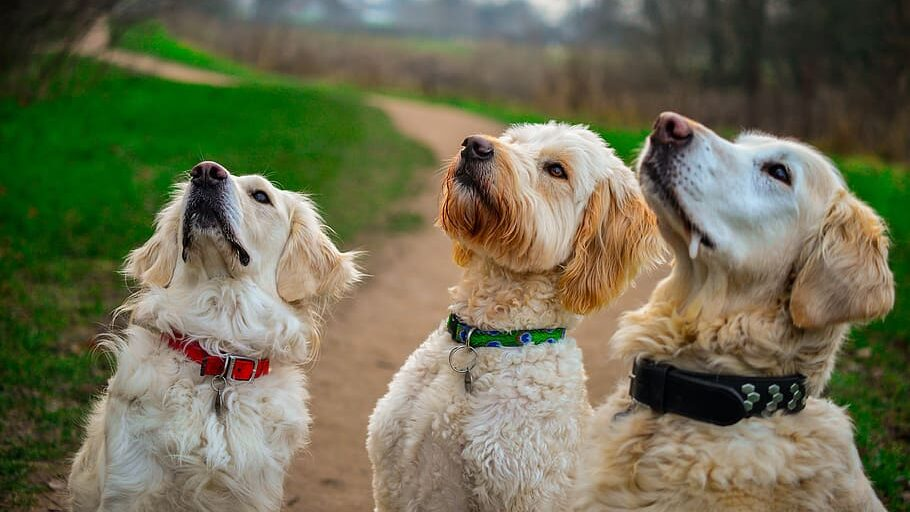 Dogs think PD Insurance is good for pet insurance