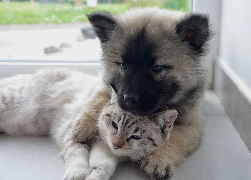 This puppy and kitten think pet insurance is worth it