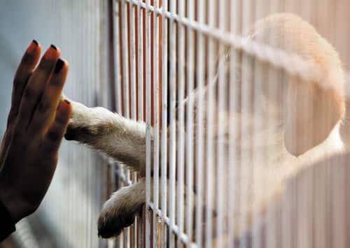 Kiwi pet owner gives up pet for adoption