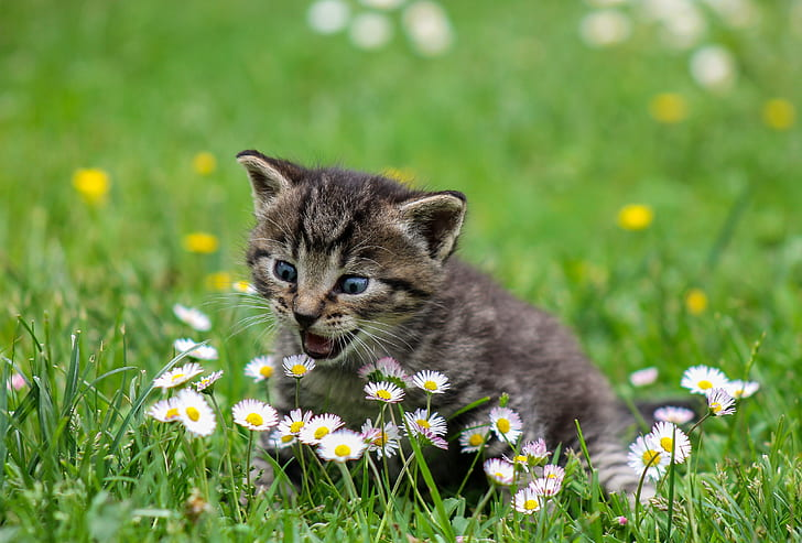 folic acid might be why cats eat grass