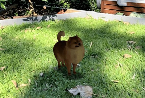 view of Pomeranian on Google 3D animals