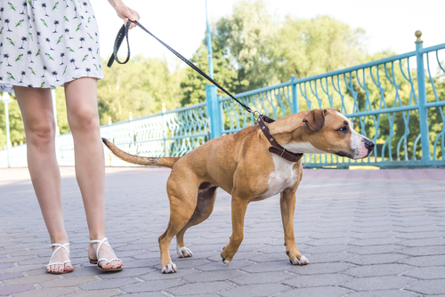 pet owner wonders 'how to stop your dog pulling on the lead?'